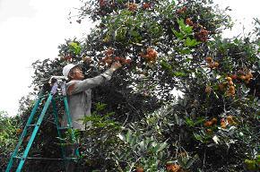 Danh mục cơ chế, chính sách hỗ trợ phát triển chương trình hoa cây kiểng và rau an toàn - Chi cục Phát triển Nông thôn