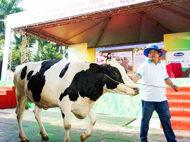"""Hội thảo """"Giải pháp phòng trị tổng hợp cho bệnh chân móng trên bò sữa nuôi tại nông hộ"""""""
